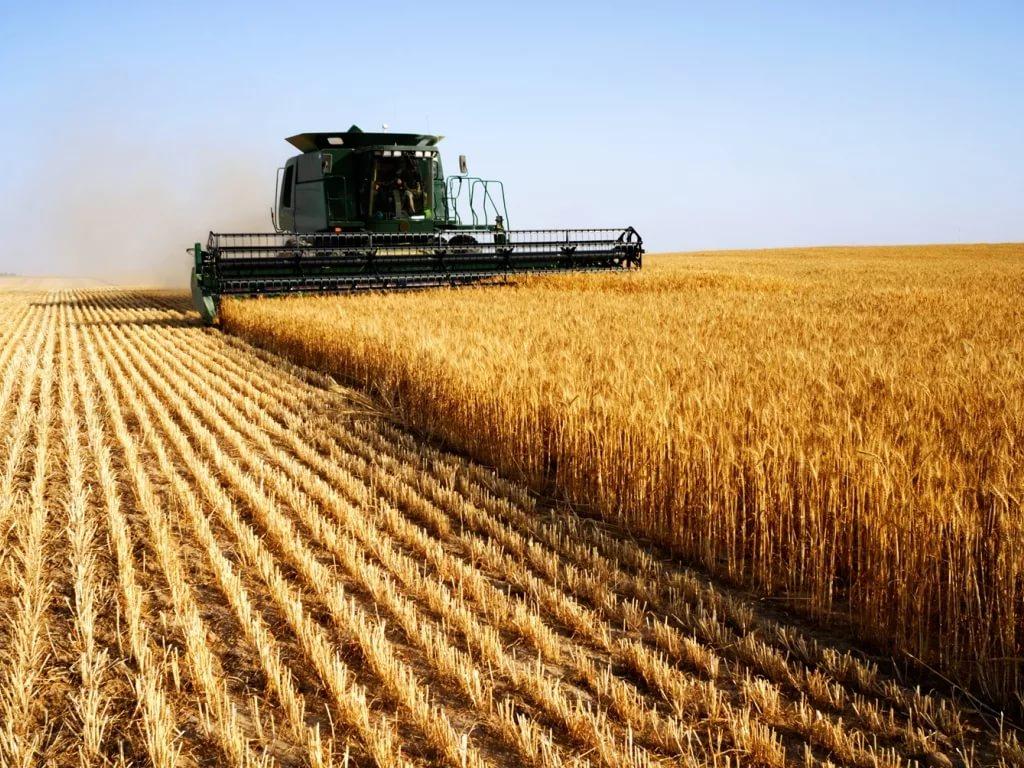 Материал по экономике сельского хозяйства