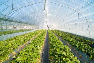 Применение поликарбоната в сельском хозяйстве