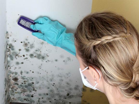 Как убрать грибок и плесень на откосах окон из пластика